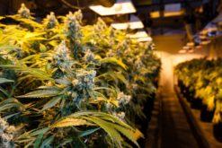 Bestrafung wegen des Besitzes von Marihuana zum Eigengebrauch
