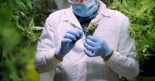 Strafzumessung wegen unerlaubten Besitzes und unerlaubten Anbaus von Betäubungsmitteln