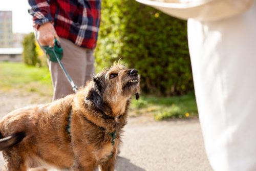 Fahrlässige Körperverletzung - Aufsichtspflichten eines Hundehalters