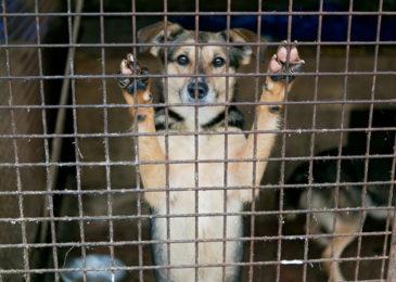 """Verstoß gegen Tierschutzgesetz - Feststellungen zum Begriff """"erhebliche Leiden von Tieren"""""""