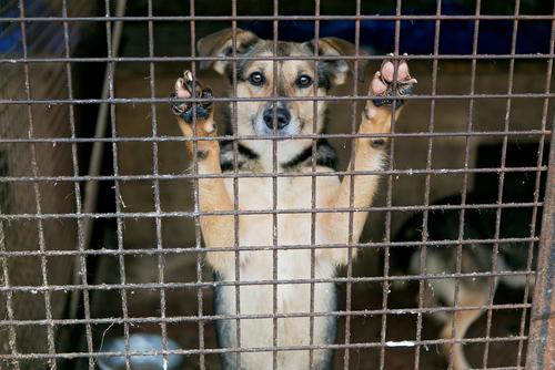 Verstoß gegen Tierschutzgesetz - Feststellungen zum Begriff