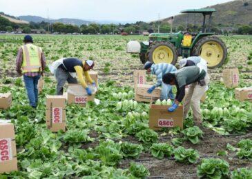 Unerlaubte Beschäftigung ausländischer Arbeitnehmer - Abführung Sozialversicherungsbeiträgen